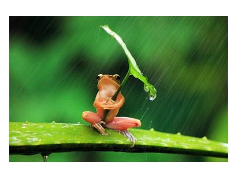 Frosch Regenschirm Foto