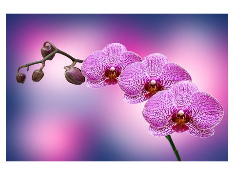 Orchidee auf Leinwand
